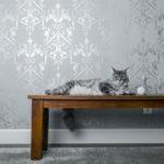 avoir un chat en appartement