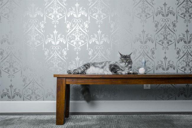 5 astuces pour avoir un chat et une belle d co trendyshow. Black Bedroom Furniture Sets. Home Design Ideas