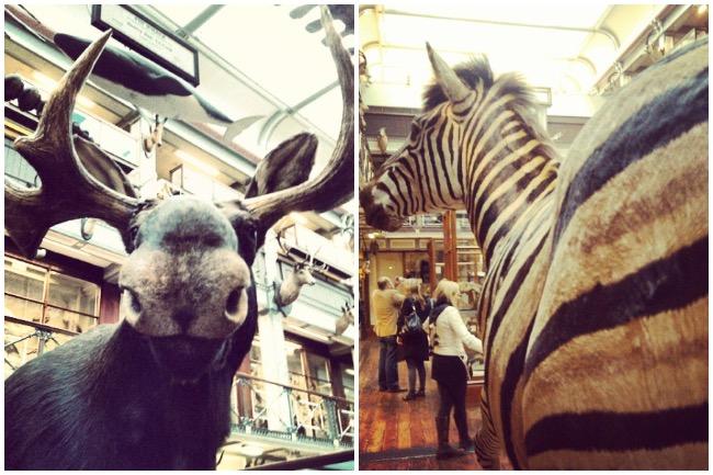 musée d'histoire naturelle dublin